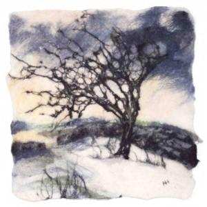 Winter Hawthorn